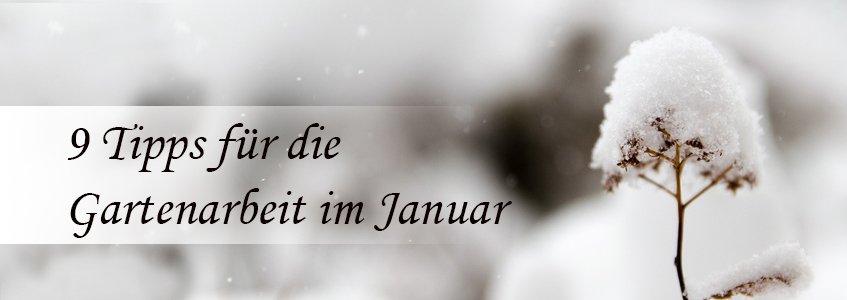 9 tipps f r die gartenarbeit im januar - Gartenarbeit im januar ...